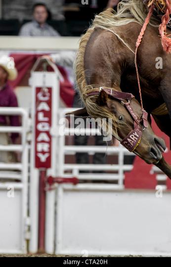 Bronc Riding Stock Photos Amp Bronc Riding Stock Images Alamy