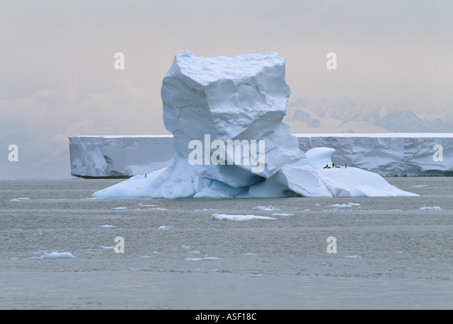 Iceberg with Adelie penguins Large tabular flat iceberg behind McMurdo Sound Ross Sea Antarctica - Stock Image