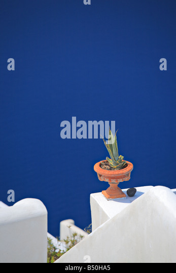 Flower pot on a traditional Greek house - Stock Image