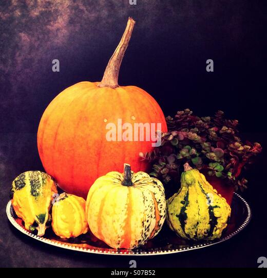 Pumpkins of different sizes on a silver plate, with dark background. - Stock-Bilder
