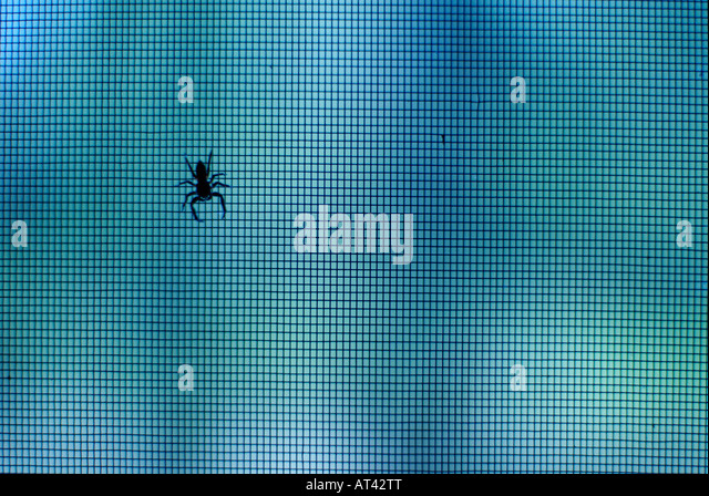 Spider on screen - Stock Image