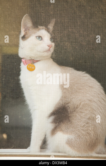 Curious cat sitting at screen window, looking away, low angle view - Stock Image