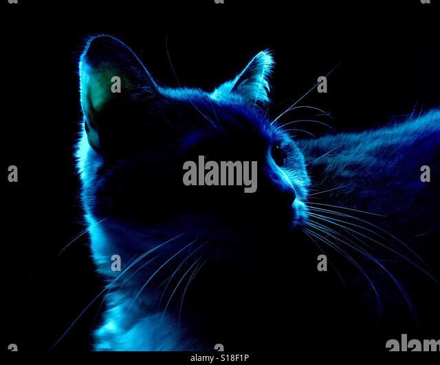 boss cat stock photos boss cat stock images alamy. Black Bedroom Furniture Sets. Home Design Ideas
