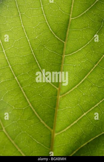 Green leaf - Stock-Bilder