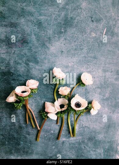 Anemone flower flatlay - Stock-Bilder