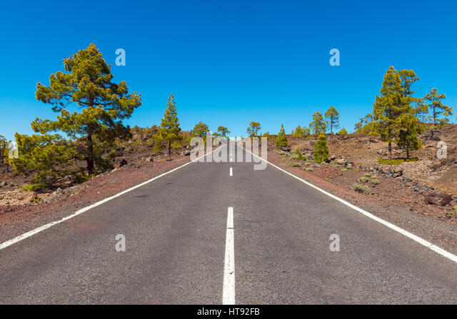 Road through Volcanic Landscape with Pine Trees in Parque Nacional del Teide, Tenerife, Canary Islands, Spain - Stock Image