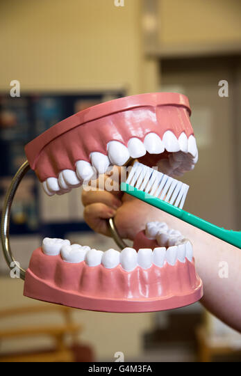 Plastic Teeth Stock Photos Amp Plastic Teeth Stock Images