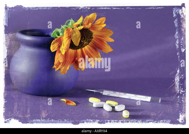 Sunflower in blue pot with thermometer and painkillers, Polaroid transfer effect - Stock Image