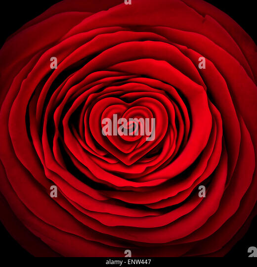 Love rose concept as a red flower design element shaped as a circle with a heart shape inside as a symbol and icon - Stock Image