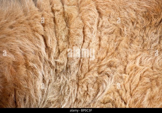 A mammal fur - Stock Image