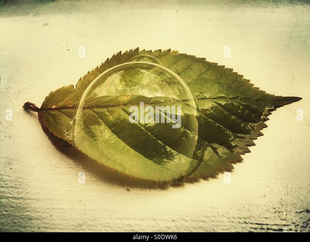 Water bubble over a green leaf - Stock Image