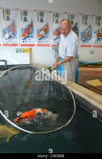 Man koi fish carp stock photos man koi fish carp stock for Koi fish farm near me