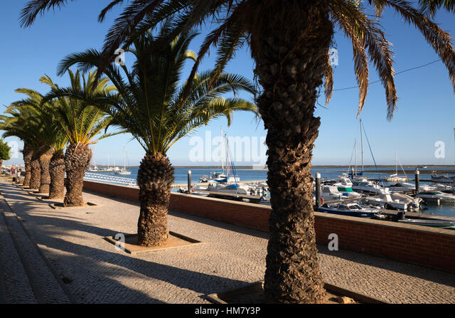 Palm tree lined promenade, Olhao, Algarve, Portugal, Europe - Stock Image