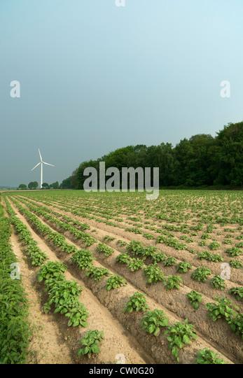 Wind turbine by field - Stock Image
