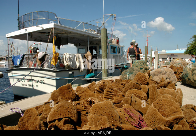 Tarpon Springs Florida Sponges spread out on the Sponge Docks beside traditional Greek sponge boats - Stock Image