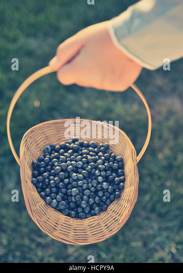 Blueberry basket - Stock Image