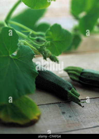 Still: Courgette - Stock Image