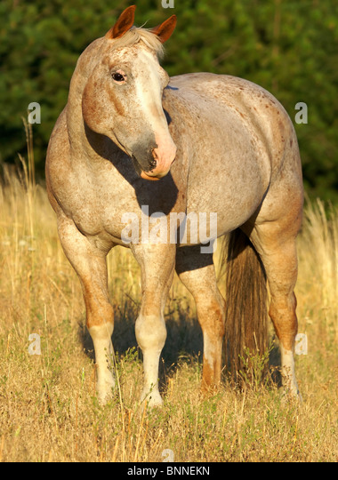 Pretty Horse Standing in Field - Stock Image