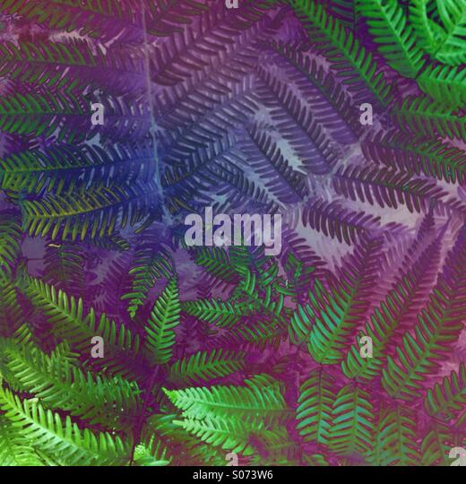 Colorful abstract patterns of fern leaves - Stock-Bilder
