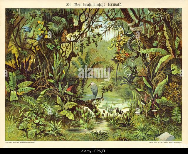 pedagogy, the Brazilian virgin forest, illustrated chart for children, images for lesson, idealize illustration, - Stock Image