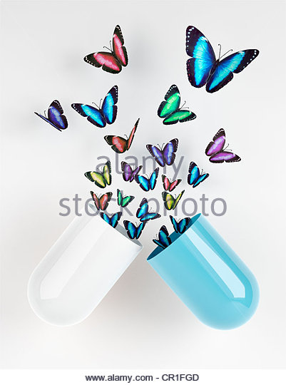 Butterflies emerging from capsule - Stock-Bilder