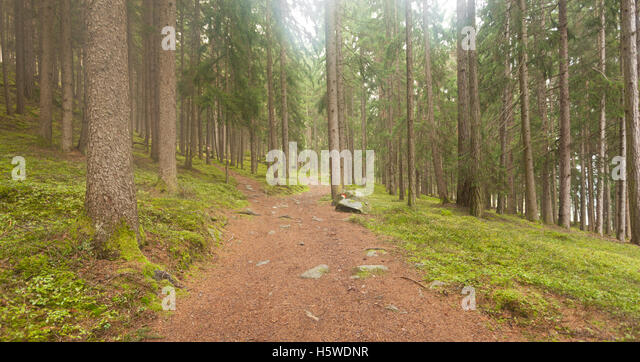 A single alpine path splits in two different directions. It's an autumnal cloudy day. - Stock Image