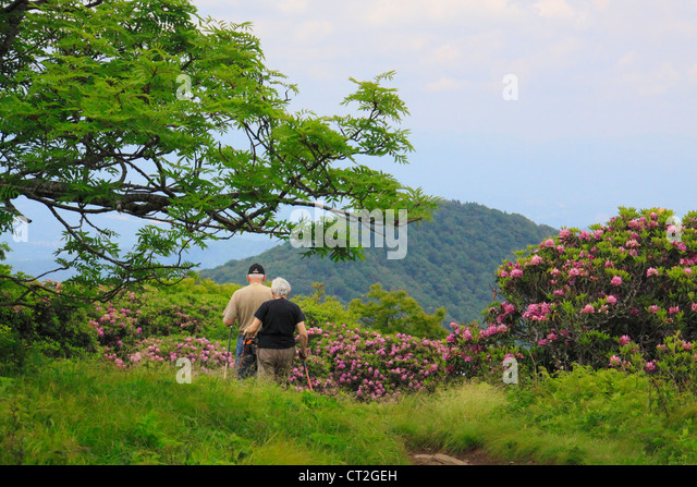 Craggy Gardens Blue Ridge Parkway Stock Photos Craggy Gardens Blue Ridge Parkway Stock Images