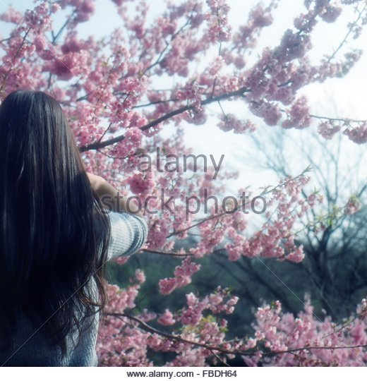 Rear View Of Woman Standing By Pink Flower Tree - Stock Image