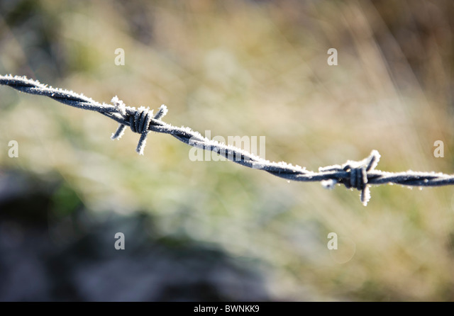 Light snow on barbed wire - Stock Image