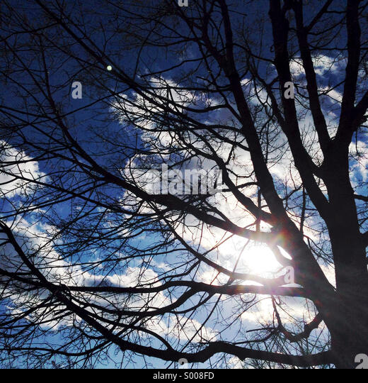 Winter tree in sunshine. - Stock Image
