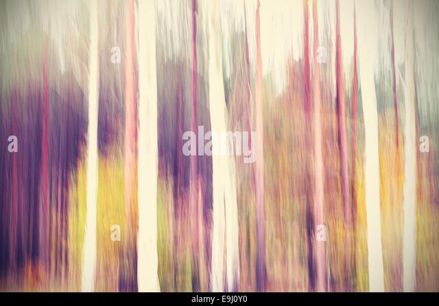 Abstract motion blurred trees in a forest. - Stock-Bilder