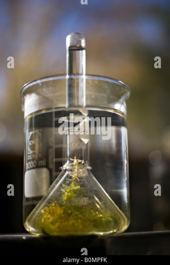photosynthesis experiment pondweed A simple protocol for measuring the rate of photosynthesis in pond weed investigating the light dependent reaction in photosynthesis use dcpip as an electron acceptor for the reducing agents produced by chloroplasts in the light-dependent reaction of photosynthesis.