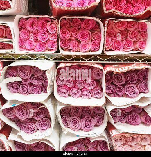 pink roses - Stock-Bilder