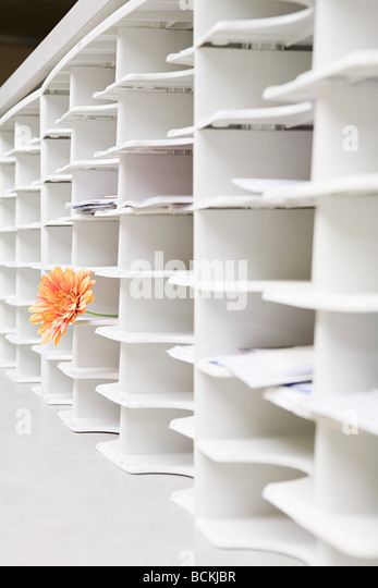 Rows of office cubby holes with a flower sticking out of one - Stock Image