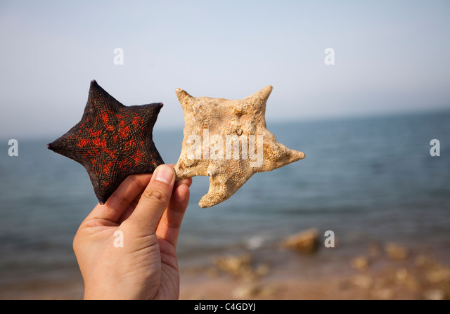 Hand holding up a starfish at the beach - Stock Image