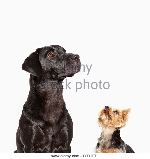 Dogs looking up - Stock Image