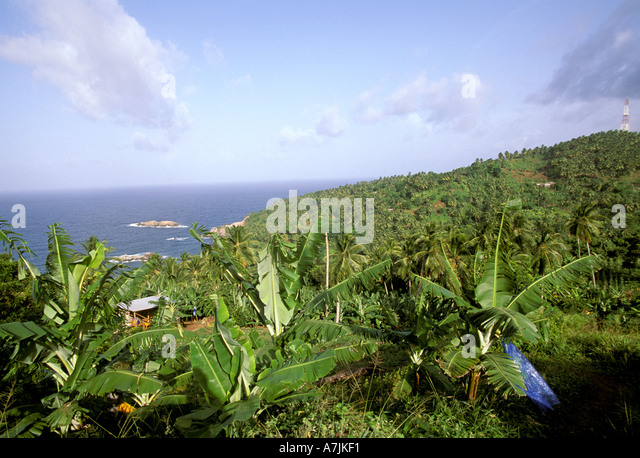 Dominica West Indies Caribbean Carib Territory Reserve Banana Plants - Stock Image