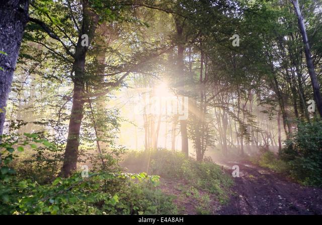 Germany, North Rhine-Westphalia, Forest, Morning mist and sunrise - Stock Image