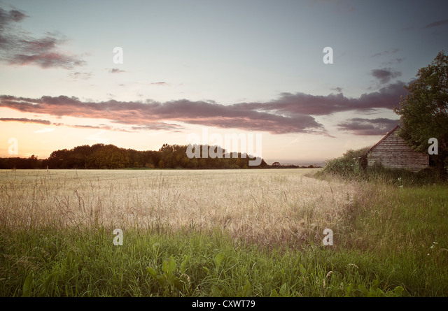 Dried grass in rural field - Stock Image
