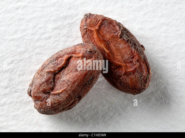 COCOA BEANS - Stock Image