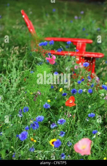 Wildflowers Surround A Red Adirondack Chair In The Tall Grass; Troutdale Oregon United States Of America - Stock Image