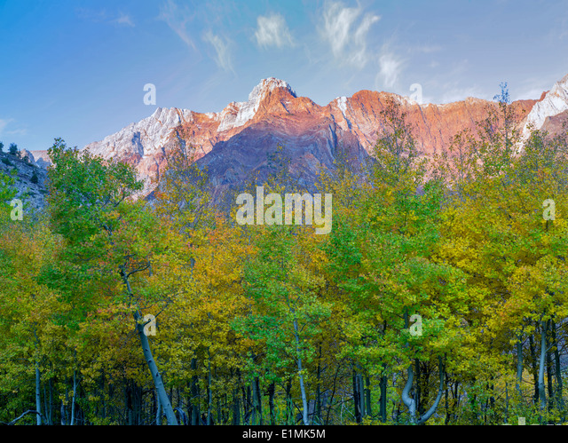 Fall colored aspen trees and Eastern sierra Nevada Mountains near McGee Cree, California - Stock Image
