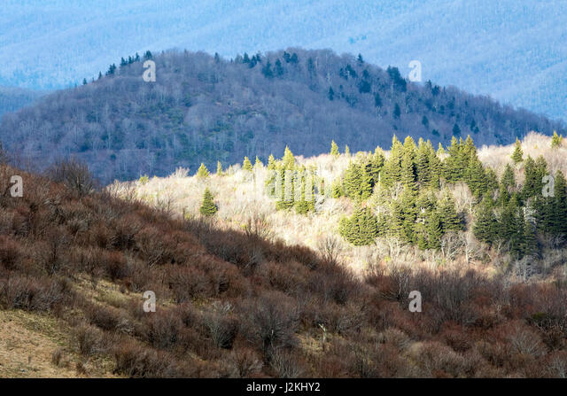 Views from Art Loeb Trail near Black Balsam Knob - Blue Ridge Parkway, North Carolina, USA - Stock Image