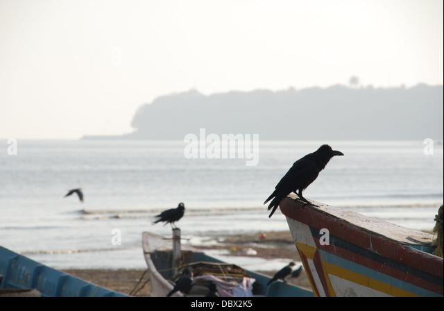 Bombay beach - Stock Image