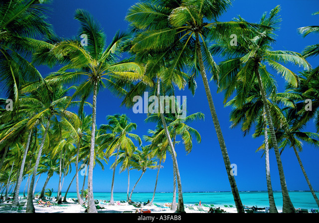 Dominican Republic Punta Cana Bavaro Beach Palm trees and beach - Stock Image