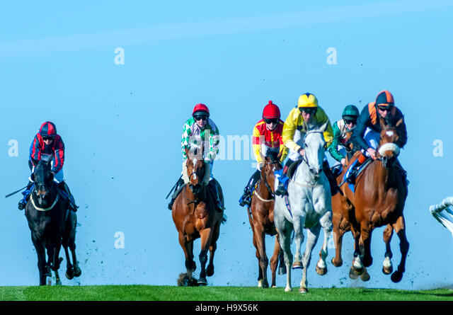 Horse-racing at Brighton Racecourse - Stock Image