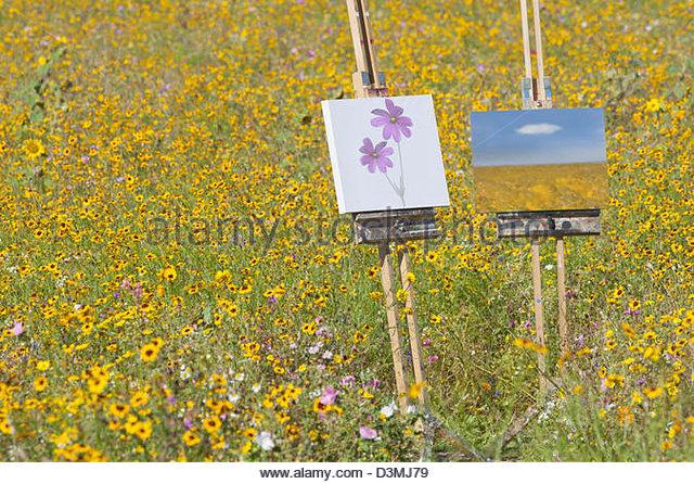 Paintings in sunny wildflower meadow - Stock-Bilder