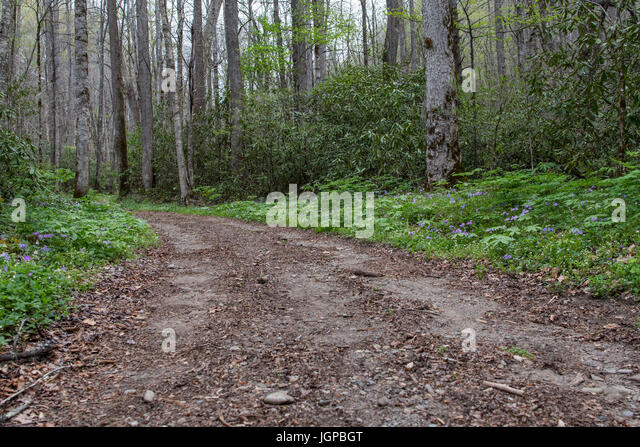 Wide Dirt Trail Through the Forest with spring flowers blooming - Stock Image