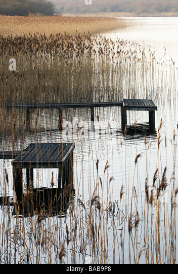 Fishing pontoon surrounded by Reeds at the edge of a lake County Fermanagh Northern Ireland - Stock-Bilder