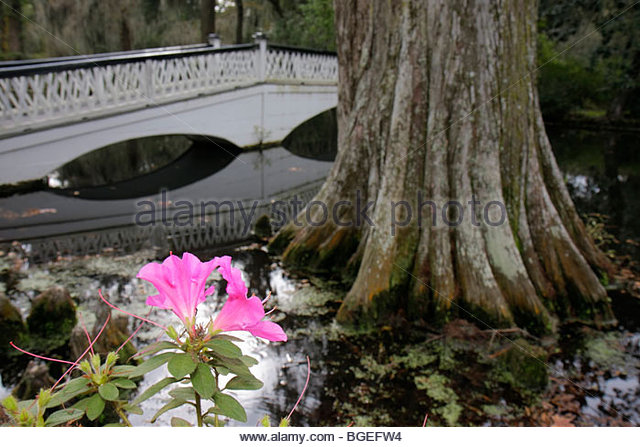 South Carolina Charleston Lowcountry Ashley River Road Magnolia Plantation and Gardens 1676 National Register of - Stock Image